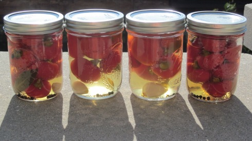 Porch pickled peppers